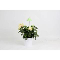 Lampadina LED per piante SUNLiTE 24 V LED a montaggio fisso 7 W Bianco neutro 1 pz.