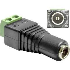 CC (corrente) Adattatore [1x Presa CC 5,5 - 1x Conduttore a due fili] Nero 0.00 m