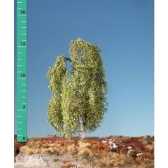 Albero Betulla bianca 1 pz.